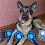 Tali with her rosettes & trophy